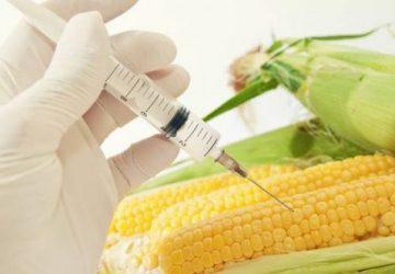 Undgå GMO