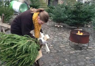 De Skovbrugsstuderendes Juletræssalg