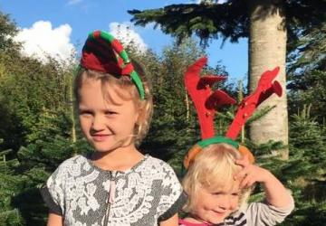 Juletræer i Aalborg