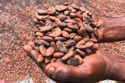 Chokolade: 2019 køberguide til bæredygtig chokolade