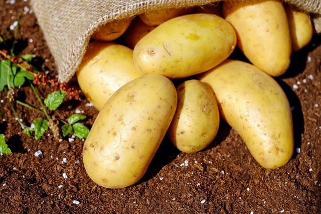 Kartofler: en livsvigtig fødevare