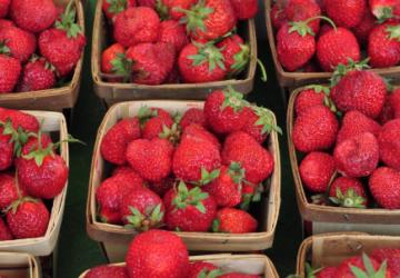 Jordbær og sundhed